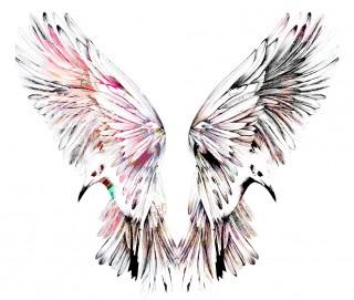 Birds S13