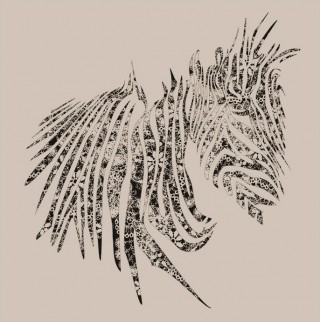 Lace Zebra